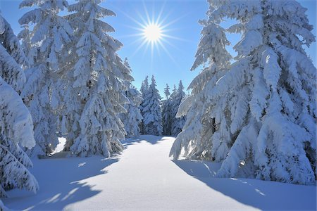 snow covered trees - Snow Covered Conifer Trees with Sun, Grosser Beerberg, Suhl, Thuringia, Germany Stock Photo - Premium Royalty-Free, Code: 600-05803703