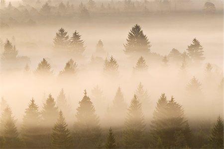 dreamy - Morning Mist, Isar Valley, Bad Tolz-Wolfratshausen, Upper Bavaria, Bavaria, Germany Stock Photo - Premium Royalty-Free, Code: 600-05821939
