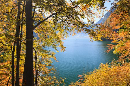 fall - Lake Koenigssee and Beech Foliage in Autumn, Berchtesgadener Land, Bavaria, Germany Stock Photo - Premium Royalty-Free, Code: 600-05837561