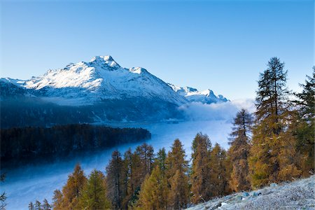 fall trees lake - Larch Trees and Piz de la Margna by Lake Sils with Fog, Engadin, Switzerland Stock Photo - Premium Royalty-Free, Code: 600-05837575