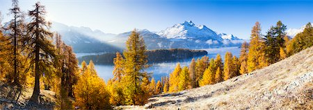fall trees lake - Larch Trees by Lake Sils and Piz de la Margna, Engadin, Switzerland Stock Photo - Premium Royalty-Free, Code: 600-05837576