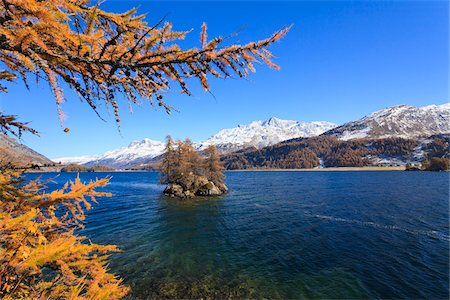 fall trees lake - Larch Trees on Island in Lake Sils with Piz Corvatsch, Engadin, Switzerland Stock Photo - Premium Royalty-Free, Code: 600-05837579
