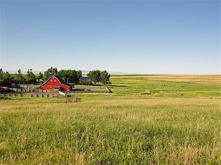 farming (raising livestock) - Farm, Pincher Creek, Alberta, Canada Stock Photo - Premium Royalty-Free, Code: 600-05855359