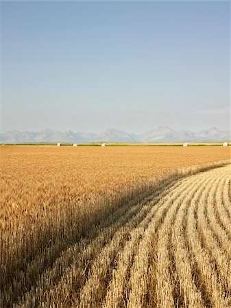 Partially Harvested Wheat Field, Rocky Mountains in Distance, Pincher Creek, Alberta, Canada Stock Photo - Premium Royalty-Free, Code: 600-05973409