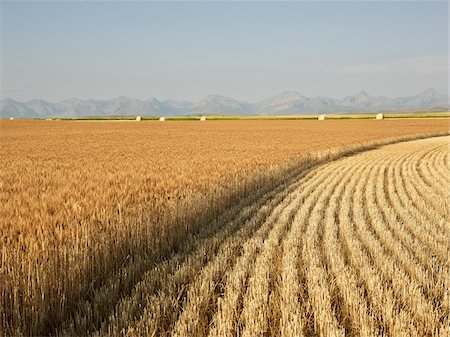 Partially Harvested Wheat Field, Rocky Mountains in Distance, Pincher Creek, Alberta, Canada Stock Photo - Premium Royalty-Free, Code: 600-05973410
