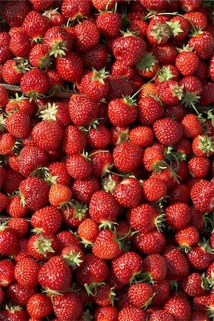 strawberries - Harvested Strawberries, DeVries Farm, Fenwick, Ontario, Canada Stock Photo - Premium Royalty-Free, Code: 600-05973563
