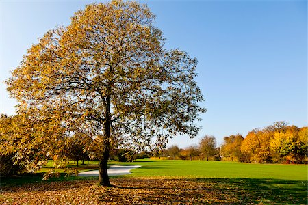 fall - Golf Course with Trees in Autumn, North Rhine-Westphalia, Germany Stock Photo - Premium Royalty-Free, Code: 600-05973837