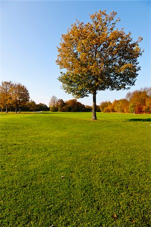 Golf Course with Trees in Autumn, North Rhine-Westphalia, Germany Stock Photo - Premium Royalty-Free, Code: 600-05973839