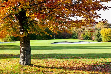 Golf Course with Trees in Autumn, North Rhine-Westphalia, Germany Stock Photo - Premium Royalty-Free, Code: 600-05973842