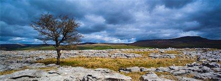 rugged landscape - Moughton Scars, Yorkshire Dales, Yorkshire, Yorkshire and the Humber, England Stock Photo - Premium Royalty-Free, Code: 600-06007908