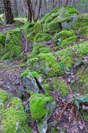 Moss on Rocks, Reginald Hill, Salt Spring Island, British Columbia, Canada Stock Photo - Premium Royalty-Free, Code: 600-06009094