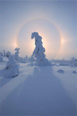 Halo and Snow Covered Trees, Fichtelberg, Ore Mountains, Saxony, Germany Stock Photo - Premium Royalty-Free, Code: 600-06038294