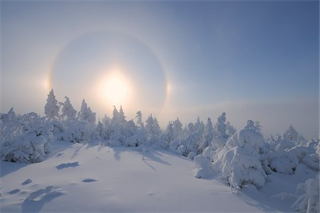 Halo over Snow Covered Trees, Fichtelberg, Ore Mountains, Saxony, Germany Stock Photo - Premium Royalty-Free, Code: 600-06038295