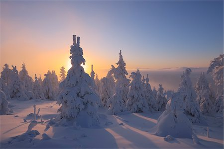 snow covered trees - Snow Covered Trees at Sunset, Fichtelberg, Ore Mountains, Saxony, Germany Stock Photo - Premium Royalty-Free, Code: 600-06038298