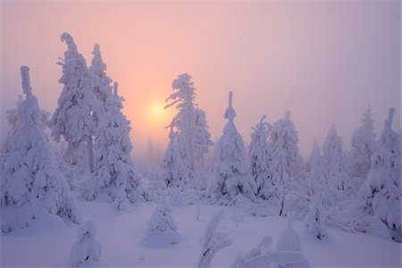 snow covered trees - Snow Covered Trees at Sunset, Fichtelberg, Ore Mountains, Saxony, Germany Stock Photo - Premium Royalty-Free, Code: 600-06038299
