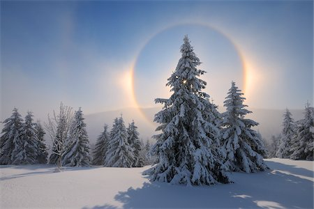 snow covered trees - Halo and Snow Covered Trees, Fichtelberg, Ore Mountains, Saxony, Germany Stock Photo - Premium Royalty-Free, Code: 600-06038306