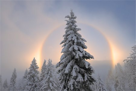 snow covered trees - Halo and Snow Covered Trees, Ore Mountains, Fichtelberg, Saxony, Germany Stock Photo - Premium Royalty-Free, Code: 600-06038301