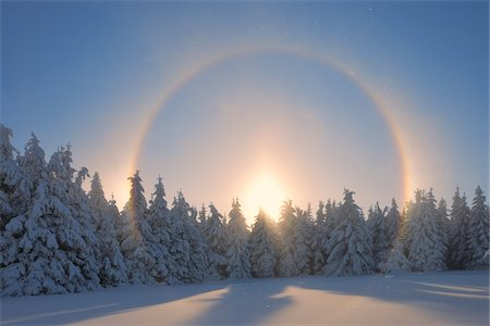 snow covered trees - Halo and Snow Covered Trees, Fichtelberg, Ore Mountains, Saxony, Germany Stock Photo - Premium Royalty-Free, Code: 600-06038302