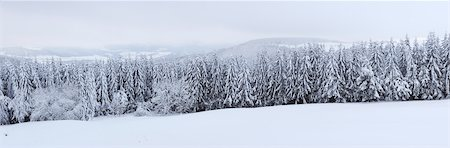 snow covered trees - Snow Covered Forest, Rhoen, Rhon Mountains, Hesse, Germany Stock Photo - Premium Royalty-Free, Code: 600-06038315