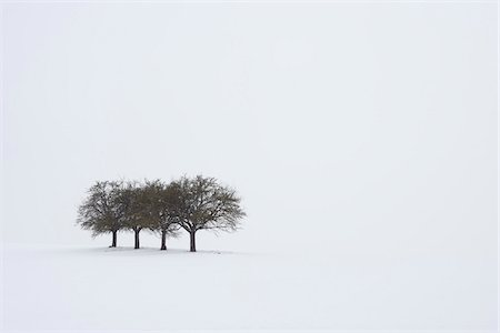 Group of Trees in Winter, Franconia, Bavaria, Germany Stock Photo - Premium Royalty-Free, Code: 600-06038317