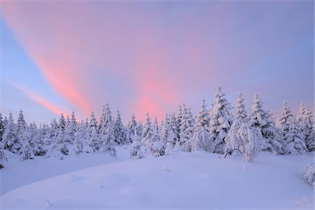 snow covered trees - Snow Covered Trees at Sunrise, Fichtelberg, Ore Mountains, Saxony, Germany Stock Photo - Premium Royalty-Free, Code: 600-06038311