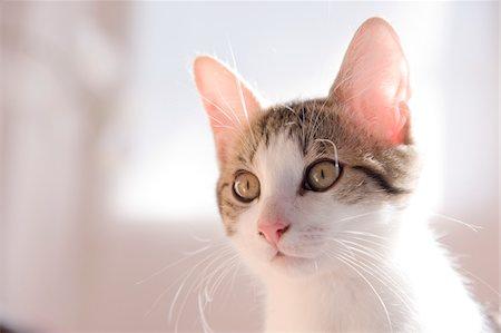 Portrait of Kitten Stock Photo - Premium Royalty-Free, Code: 600-06119785