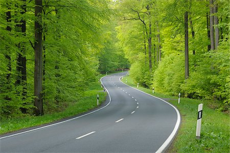 Road Through Forest, Spessart, Bavaria, Germany, Europe Stock Photo - Premium Royalty-Free, Code: 600-06144897
