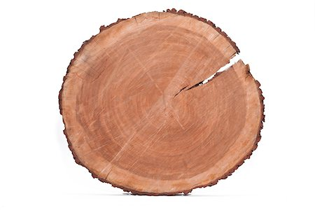 Cross-section of Tree Trunk Stock Photo - Premium Royalty-Free, Code: 600-06282082