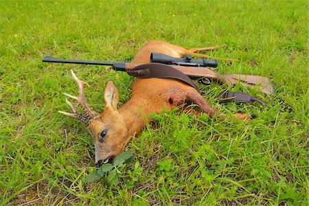 deer hunt - European Roebuck with Rifle, Hesse, Germany Stock Photo - Premium Royalty-Free, Code: 600-06334274