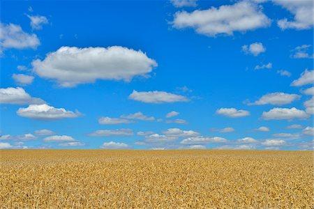 Wheat Field, Arnstein, Main-Spessart, Franconia, Bavaria, Germany Stock Photo - Premium Royalty-Free, Code: 600-06334508