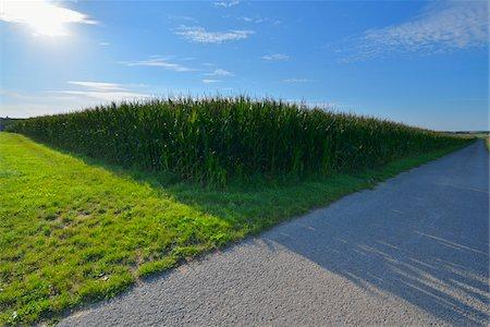 Cornfield, Arnstein, Main-Spessart, Franconia, Bavaria, Germany Stock Photo - Premium Royalty-Free, Code: 600-06334502