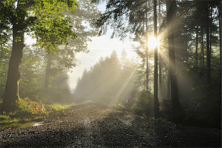 pretty - Forest Path with Morning Mist and Sun, Michelstadt, Odenwald, Hesse, Germany Stock Photo - Premium Royalty-Free, Code: 600-06368474