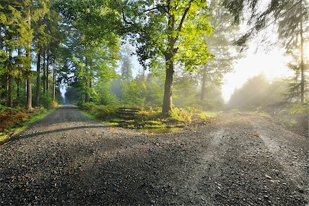 roads and sun - Forked Forest Path with Morning Mist and Sun, Michelstadt, Odenwald, Hesse, Germany Stock Photo - Premium Royalty-Free, Code: 600-06368476