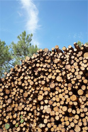 Pile of Logs, Lacanau, Gironde, Aquitaine, France Stock Photo - Premium Royalty-Free, Code: 600-06407758