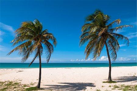 palm - Palm Trees by Ocean, Palm Beach, Aruba, Lesser Antilles, Caribbean Stock Photo - Premium Royalty-Free, Code: 600-06431283
