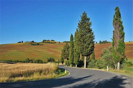 Road with Cypress Trees in Summer, Pienza, Val d'Orcia, Province of Siena, Tuscany, Italy Stock Photo - Premium Royalty-Free, Code: 600-06486645