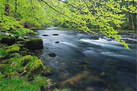 spring - Spring Foliage along Orbe River, Vallorbe, Jura, Jura Mountains, Switzerland Stock Photo - Premium Royalty-Free, Code: 600-06553327