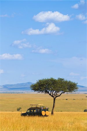Acacia tree and safari jeep in the Maasai Mara National Reserve, Kenya Stock Photo - Premium Royalty-Free, Code: 600-06671738