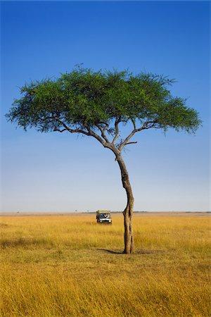 View of acacia tree and safari jeep, Maasai Mara National Reserve, Kenya Stock Photo - Premium Royalty-Free, Code: 600-06671739