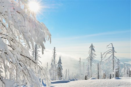 Snow Covered Conifer Forest with Sun, Winter, Grafenau, Lusen, National Park Bavarian Forest, Bavaria, Germany Stock Photo - Premium Royalty-Free, Code: 600-06701988