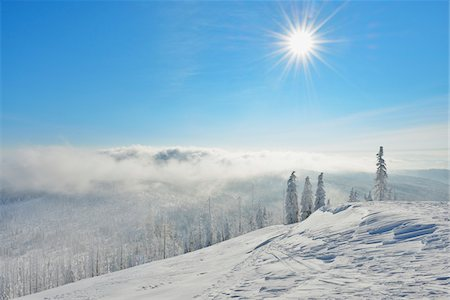 snow covered trees - Snow Covered Conifer Forest in the Winter, Grafenau, Lusen, National Park Bavarian Forest, Bavaria, Germany Stock Photo - Premium Royalty-Free, Code: 600-06701993