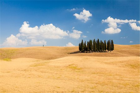 Group of Mediterranean Cypress Trees (Cupressus sempervirens) in Oat Field in Summer, Val d'Orcia, Tuscany, Italy Stock Photo - Premium Royalty-Free, Code: 600-06702028