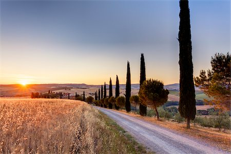 Mediterranean Cypress Trees (Cupressus sempervirens) Lining Country Road at Sunrise in Summer, Val d'Orcia, Tuscany, Italy Stock Photo - Premium Royalty-Free, Code: 600-06702036