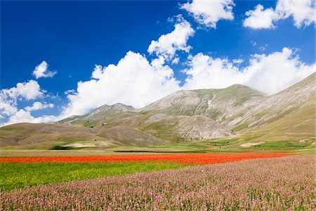 Field of Common Sainfoin (Onobrychis viciifolia) and Corn Poppies (Papaver rhoeas) on Piano Grande, Monti Sibillini National Park, Umbria, Italy Stock Photo - Premium Royalty-Free, Code: 600-06702051
