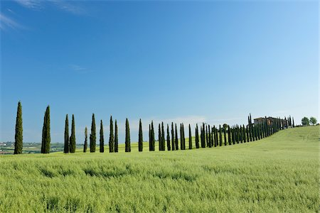 Treelined Path (Cypress Trees) with Farmhouse. Val d´Orcia, Tuscany, Siena Province, Mediterranean Area, Italy. Stock Photo - Premium Royalty-Free, Code: 600-06732548