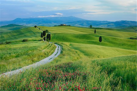 Path passing through green fields treelined with cypress trees and Mount Amiata in background. Pienza, Siena Province, Val d´Orcia, Tuscany, Italy, Mediterranean Area. Stock Photo - Premium Royalty-Free, Code: 600-06732542