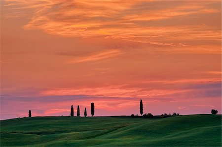 purple - Cypress trees with sunset sky. Pienza, Siena Province, Val d´Orcia, Tuscany, Italy. Stock Photo - Premium Royalty-Free, Code: 600-06732543