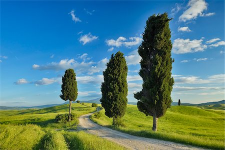 Cypress trees along country road, through green fields. Pienza, Val d´Orcia, Siena Province, Tuscany, Italy. Stock Photo - Premium Royalty-Free, Code: 600-06732555