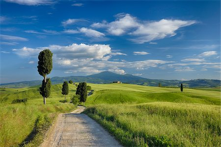 scenic view - Cypress trees along country road, through green fields. Pienza, Val d´Orcia, Siena Province, Tuscany, Italy. Stock Photo - Premium Royalty-Free, Code: 600-06732552