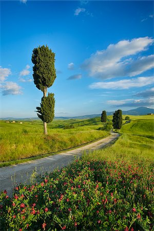 Cypress trees along country road, through green fields. Pienza, Val d´Orcia, Siena Province, Tuscany, Italy. Stock Photo - Premium Royalty-Free, Code: 600-06732553